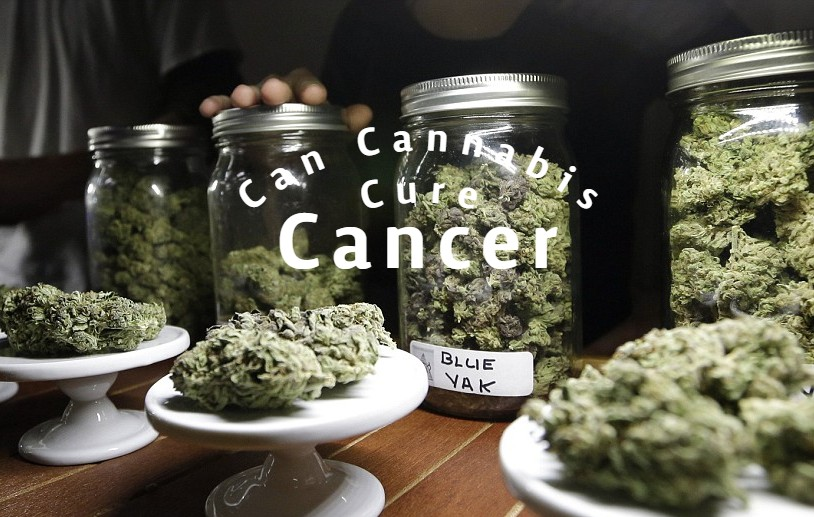 Can Cancer Patients Benefit From Cannabis?